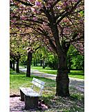 Park, Spring, Tree Blossom
