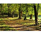 Autumn, Path