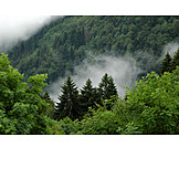Forest, Fog, Black forest, Fog, Mixed forest