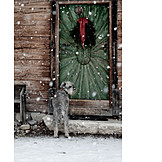 Winter, Dog, Excluded