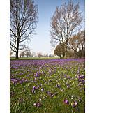Park, Spring, Rheinpark
