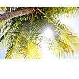 Sunlight, Summer, Palm