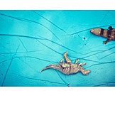 Summer, Toy, Childhood, Animal Figure, Wading Pool