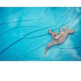 Toy, Animal figure, Dinosaur, Wading pool