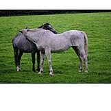 Horse, Grooming