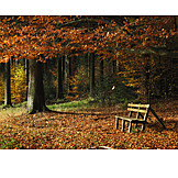 Forest, Autumn, Autumn Forest, Bank