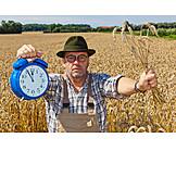Harvest, Harvest Time, Farmer