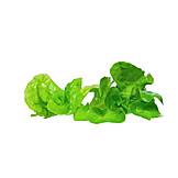 Lettuce leaf, Lettuce