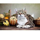 Lying, Autumn, Cat