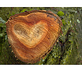 Heart shaped, Cut surface, Tree ring
