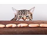 Cat, Curious, Temptation