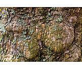 Tree trunk, Bark, Tree moss