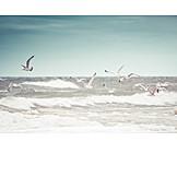 Sea, Baltic sea, Gulls, Stormy