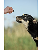 Sheepdog, Treat  , Australian kelpie