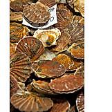 Fish market, Scallop