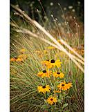 Grasses, Sun hat