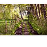 Path, Dirt