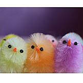 Easter, Easter Chicks