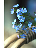 Forget, Me, Not, Spring flower