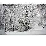Winter, Snowy, Tree