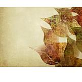 Backgrounds, Autumn, Autumn Leaves