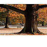 Tree, Park, Autumn