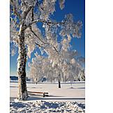 Tree, Winter