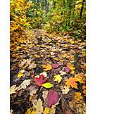 Autumn, Path, Autumn Leaves, Forest