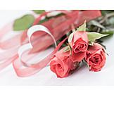 Rose, Valentine