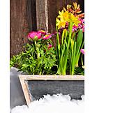 Spring, Spring Flower, Spring Flowers