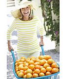 Harvest, Oranges, Fruit Harvest, Pushing, Fruit Growing, Wheelbarrow