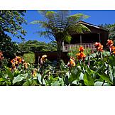 Garden, Tropical, Costa Rica, Monteverde