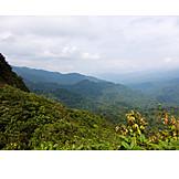 Rainforest, Costa rica, Monteverde