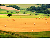 Field, Agriculture, Hay harvest, Round bales