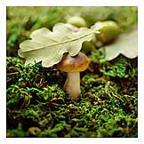 Nature, Season, Forest