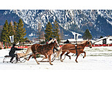 Winter, Sleigh, Sleigh Race