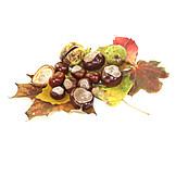 Chestnut, Horse chestnut