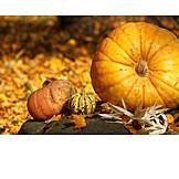 Autumn, Squash, October