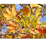 Autumn, Autumn, Autumn Leaf