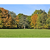 Forest, Autumn Forest, Autumn