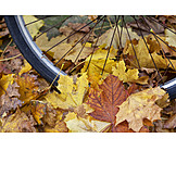 Autumn, Bicycle Tires, Slipping Hazard