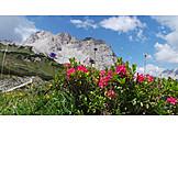 European alps, Alpine flowers