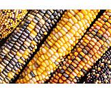 Maize cob, Maize