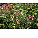 Flower meadow, Wild flower
