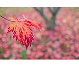 Season, Autumn leaf, Autumn colors
