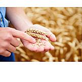 Wheat, Farmer, Wheat field