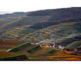 Vineyard, Cultural landscape, Uvogtsburg im kaisersthl