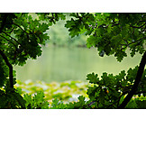 Nature, Environment, Oak tree