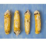 Maize cob, Maize, Vegetarian