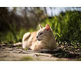 Cat, Cat